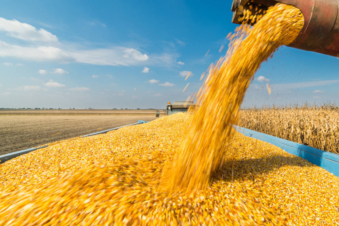 Monsanto's Driverless Car: Is CRISPR Gene Editing Driving Seed Consolidation?