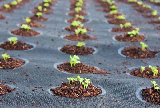Seedsheets are made of weed-blocking fabric, a thick layer of soil and dissolvable pods full of organic seeds.