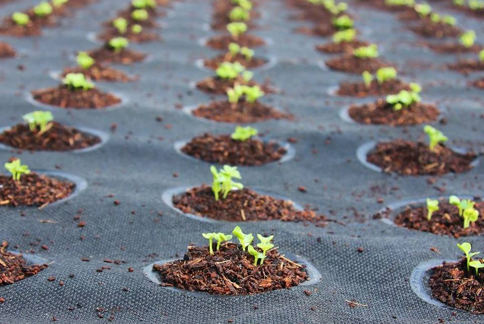 Seeds Of Change: Mini Gardens Help Drive The Growth Of Food At Home