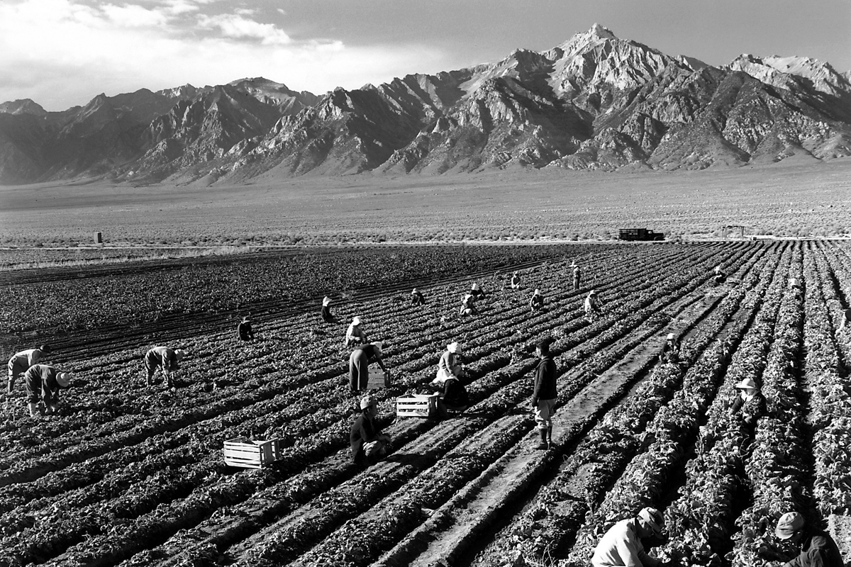 Ansel Adams documented farmworkers at Japanese internment camps in California.