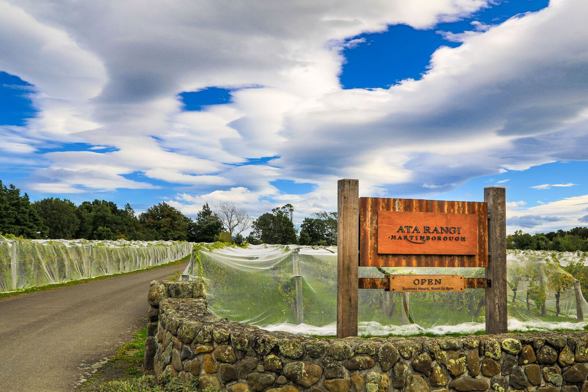 Like most New Zealand wineries, superstar Ata Rangi nets its vineyards to prevent voracious, non-native birds from consuming the whole crop.