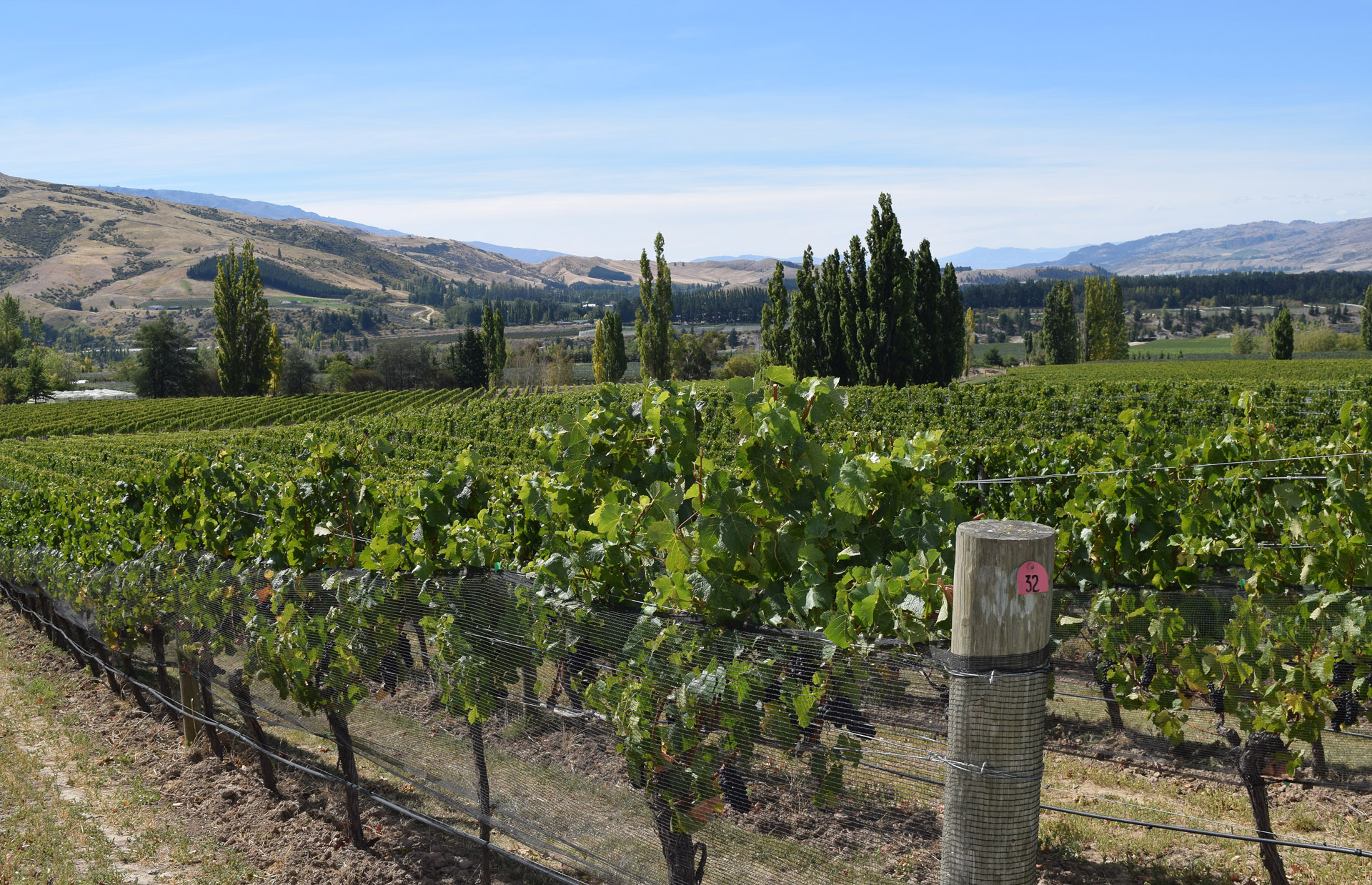 Legendary Felton Road is in a lovely part of Central Otago called Bannockburn and makes some of the top pinot noirs in New Zealand.