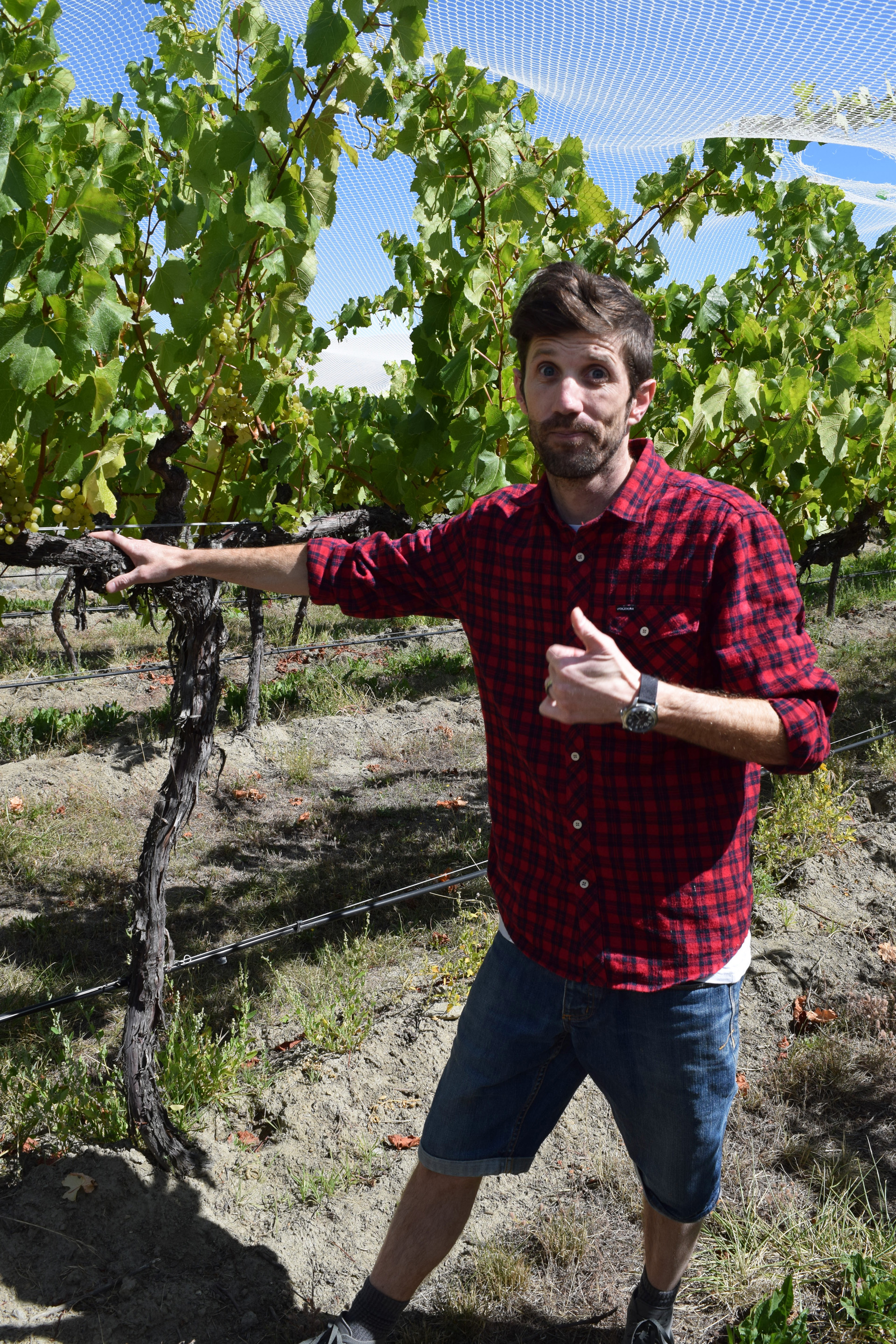"""Young winemaker Francis Hutt explains that the many large producers of his country's sauvignon blanc brands """"pay for a lot of our research and science and help develop markets,"""" benefitting the whole industry."""
