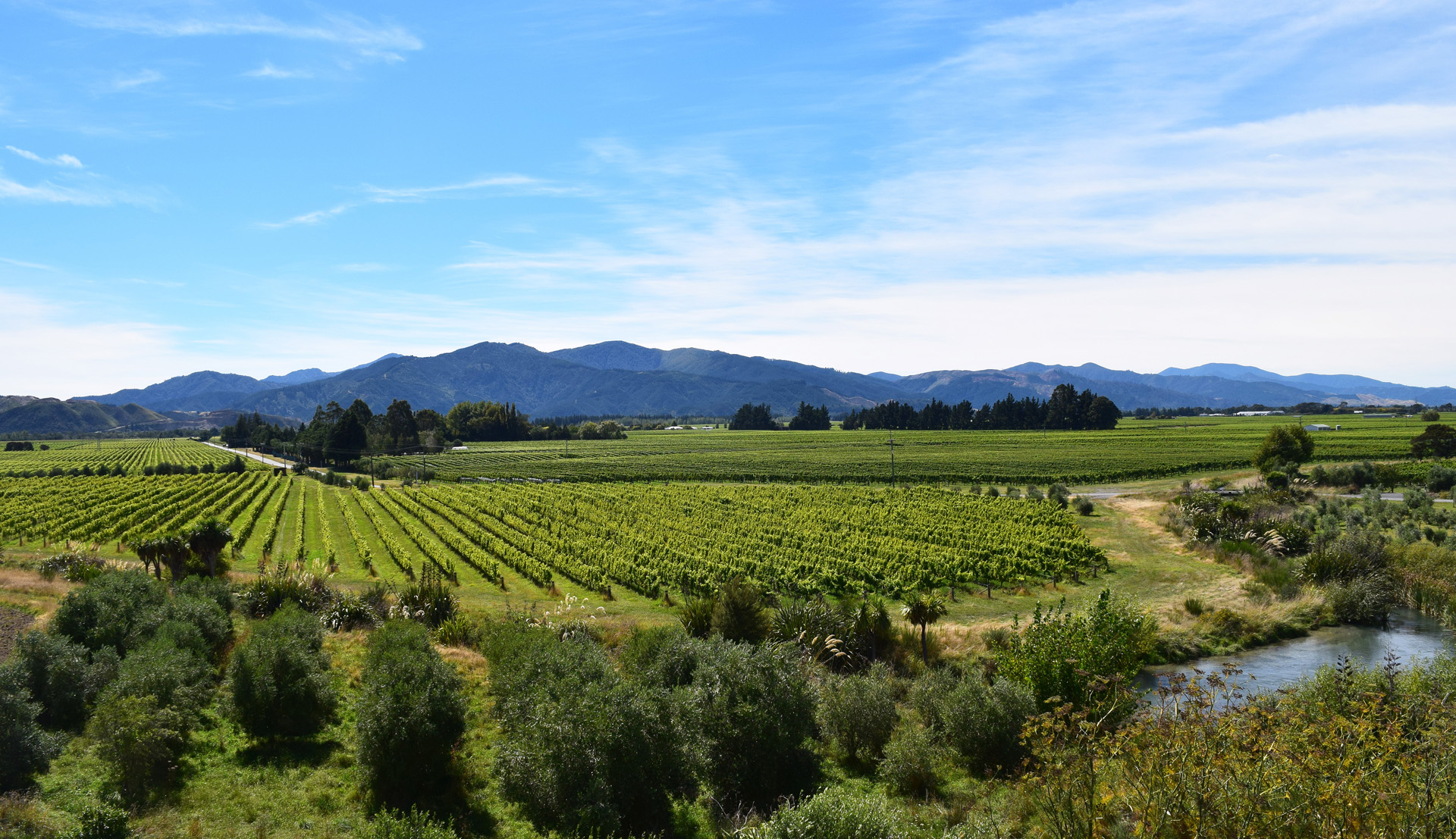 New Zealand's version of Napa Valley is the expansive Marlborough region, which produces 66% of the country's wine and is the home of famous Cloudy Bay.