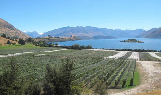 One of the world's most picturesque vineyards is that of Rippon in New Zealand's Central Otago region.