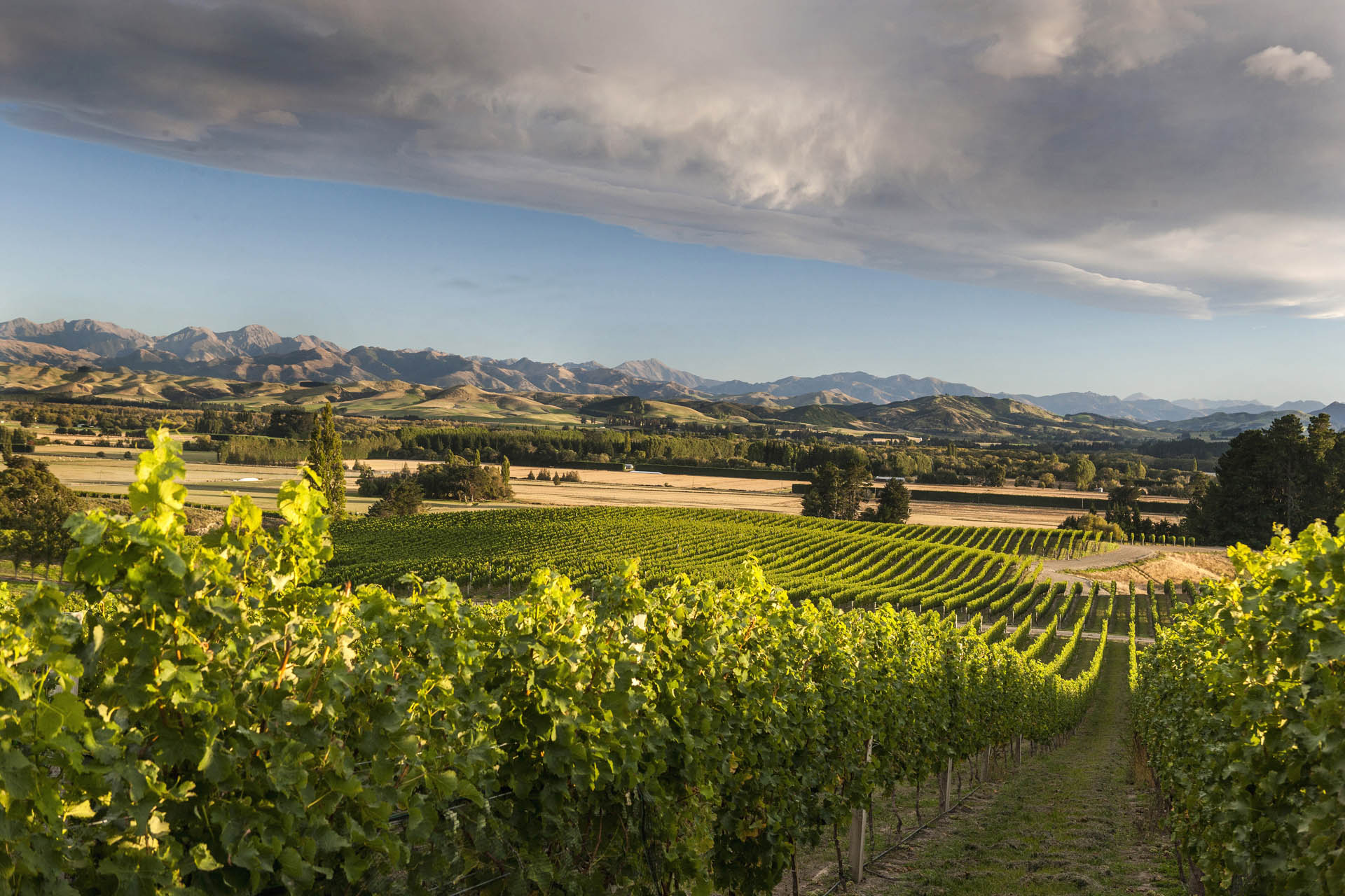 The up-and-coming Waipara wine region north of Christchurch is like many Kiwi wine areas in that wine touring by bike is popular.