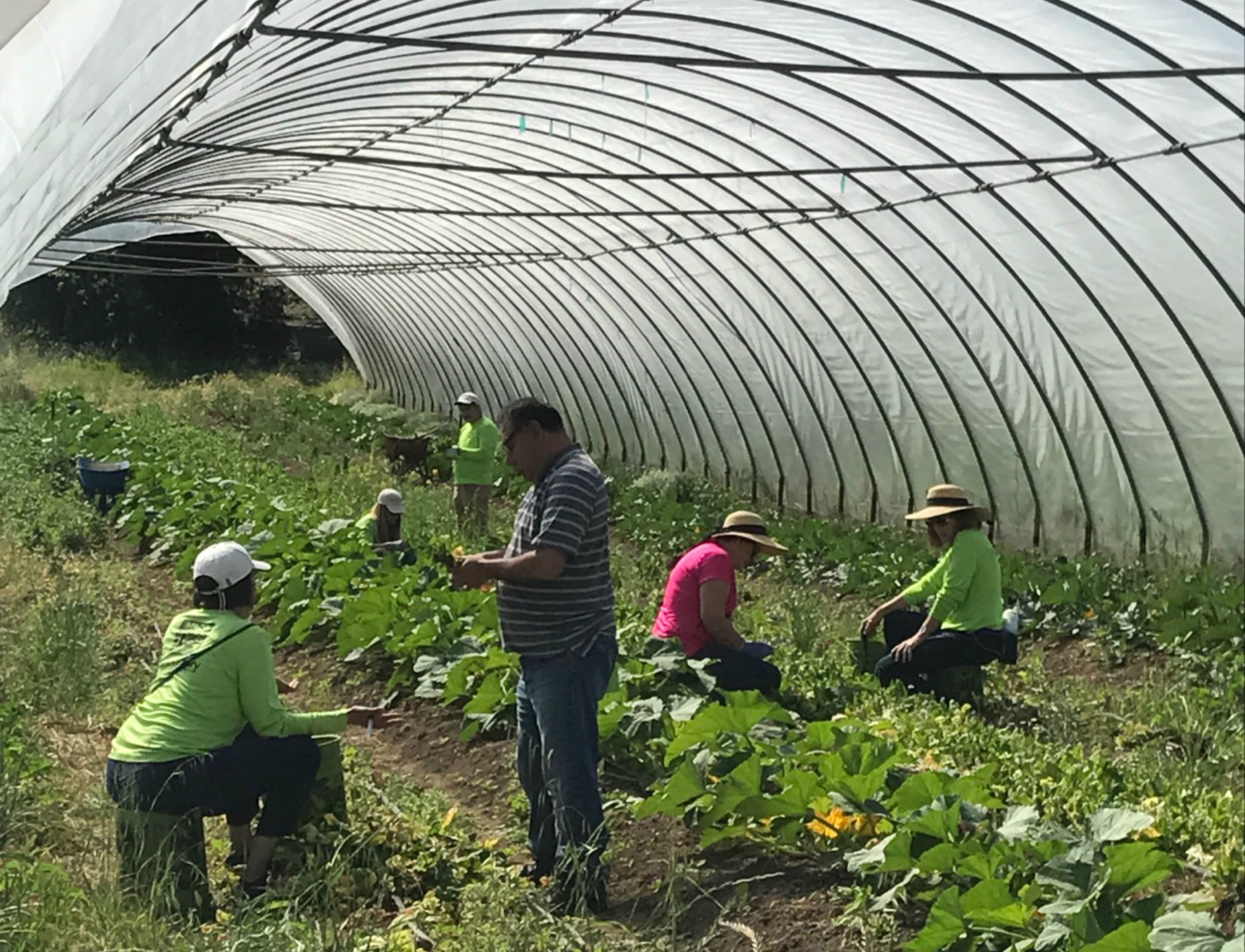 Farm To Pantry volunteers glean excess produce from farms to donate to charities.