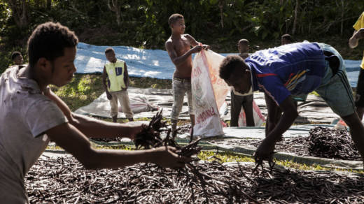 "Workers spread ""red vanilla"" (vanilla that has been treated by special cooking) in the sun to be dried near Sambava, Madagascar, in May 2016. Madagascar, producer of 80 percent of the world's vanilla, has seen huge jumps in the price. It's one of the most labor-intensive foods on Earth."