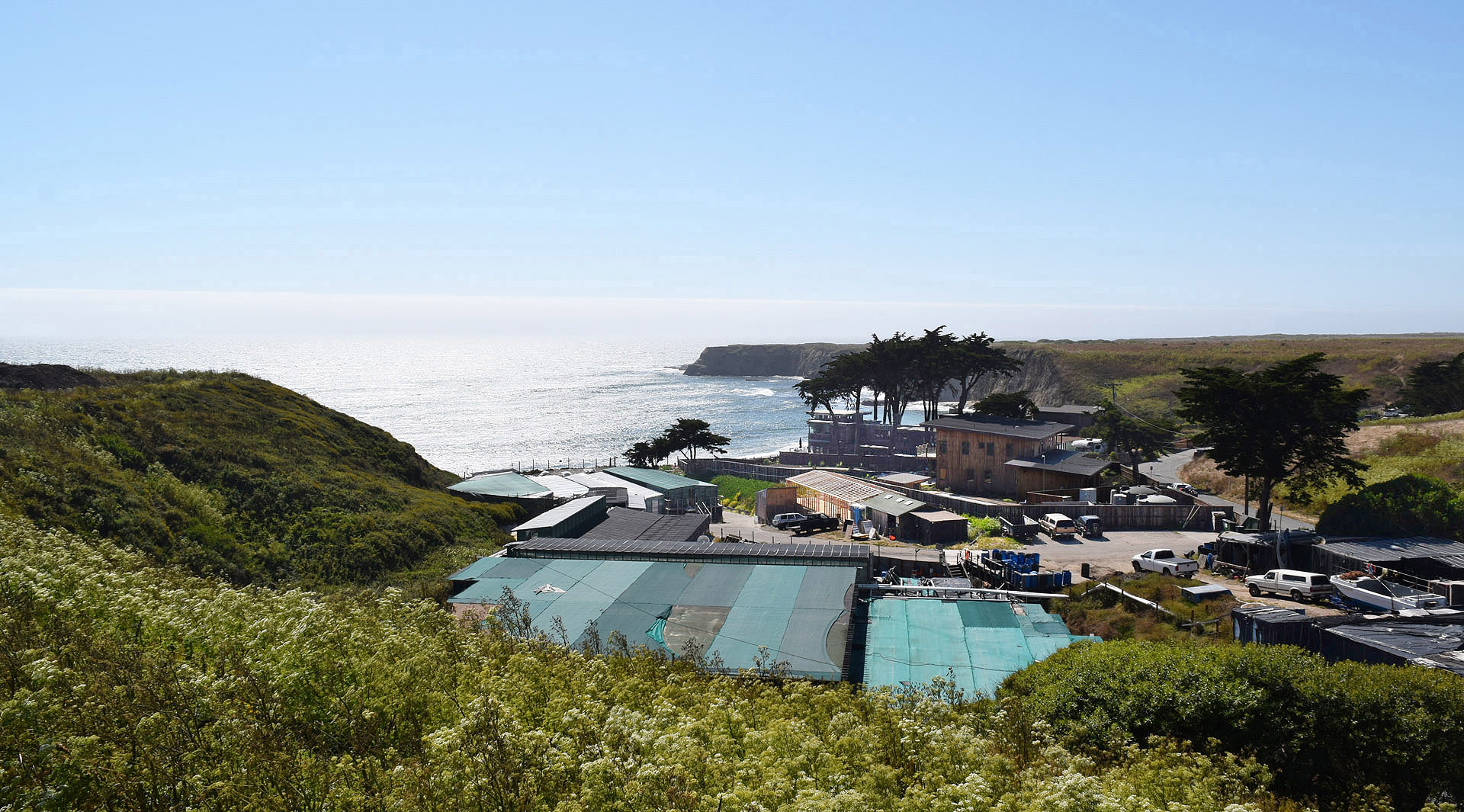 American Abalone Farms is located on a picturesque cove near Santa Cruz, where visitors can buy and consume abalone and other local seafood on Saturdays.
