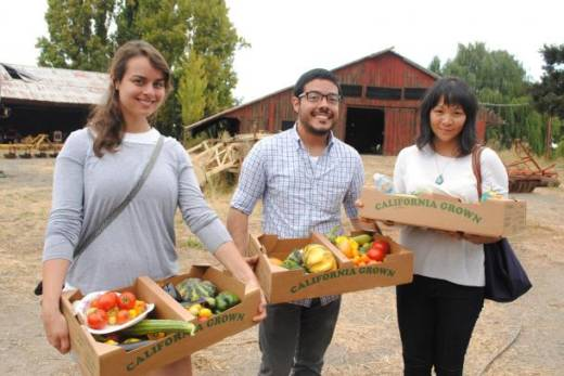 CUESA farm tour goers harvest vegetables.