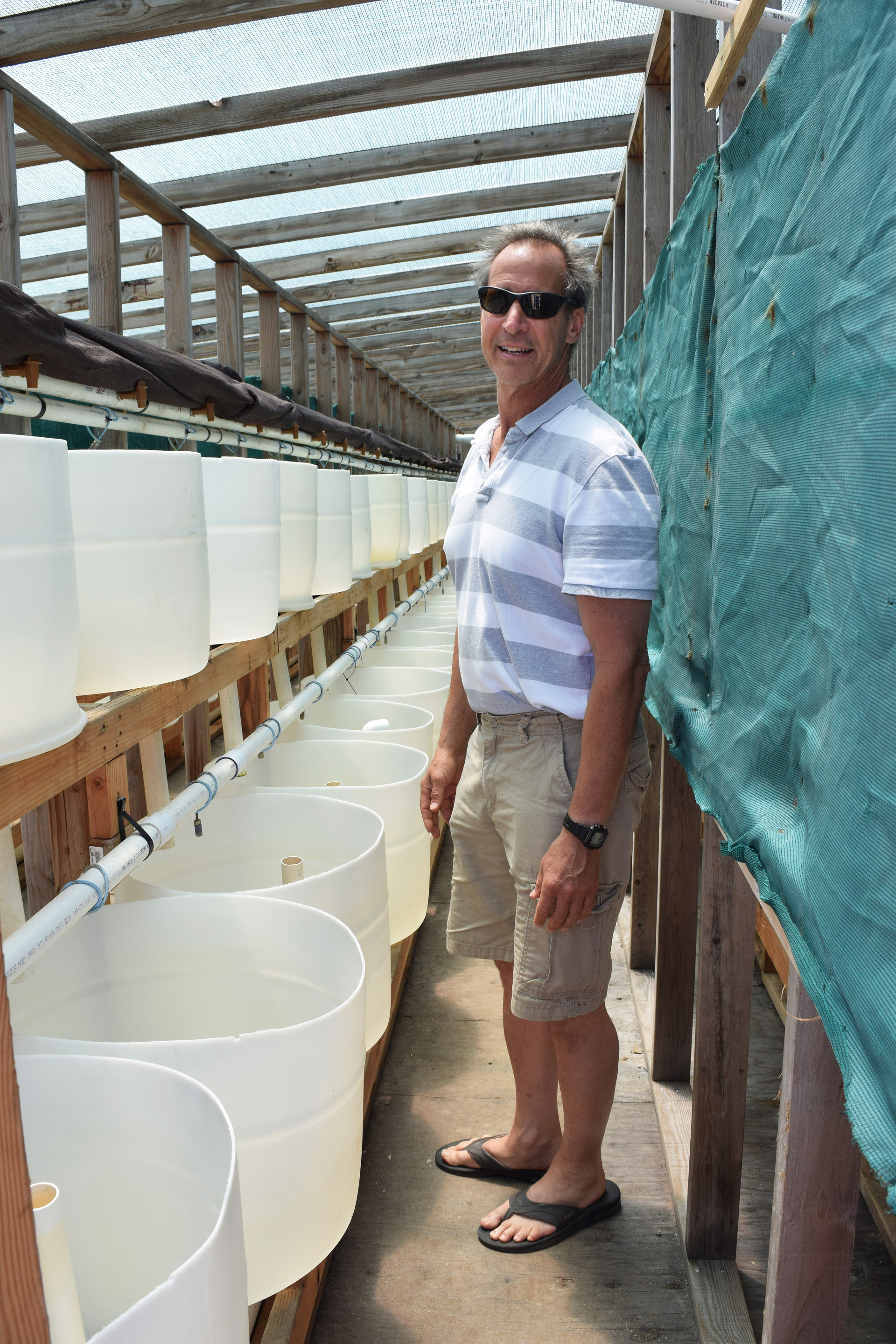 Tom Ebert and some of his hundreds of seawater-filled tanks where abalone grow from pencil-point size into marketable mollusks.