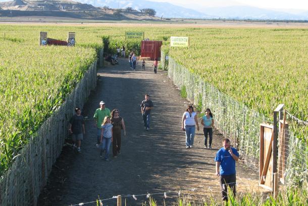 Swank Farms corn maze in Hollister.