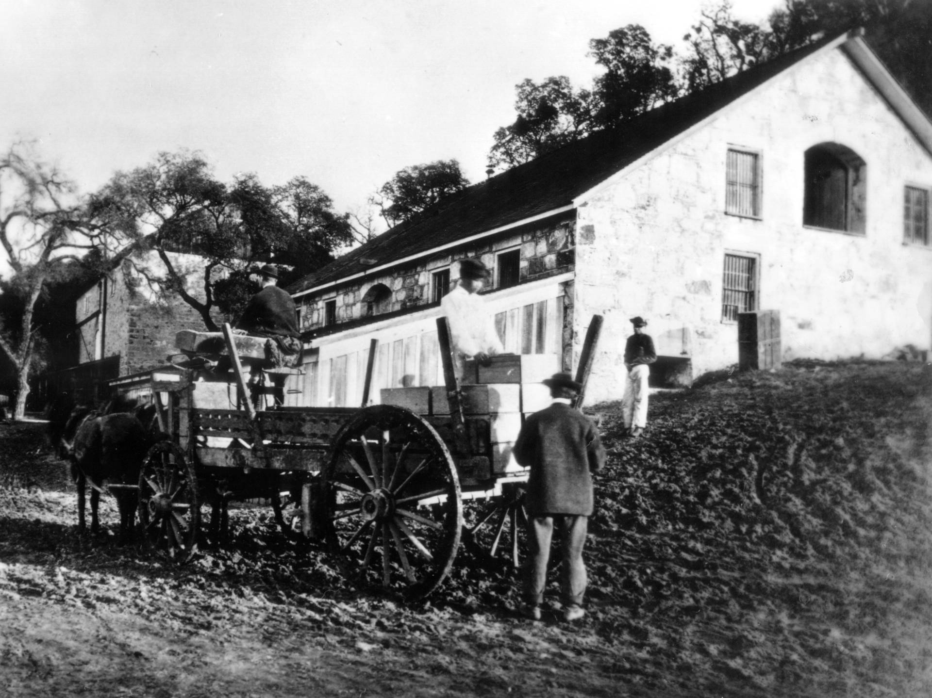 Chinese workers transport wine at Buena Vista, the oldest winery in California's Sonoma County, built in the mid-1800s. From the backbreaking labor of clearing roads and digging out caves to highly skilled horticultural work, Chinese laborers helped build Sonoma's wine country.