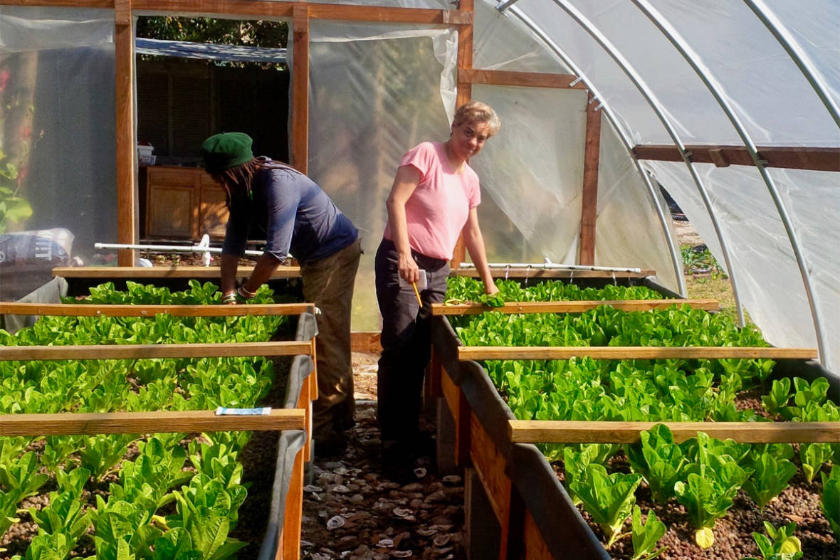 Aquaponics Farmers Band Together to Set Their Industry Apart
