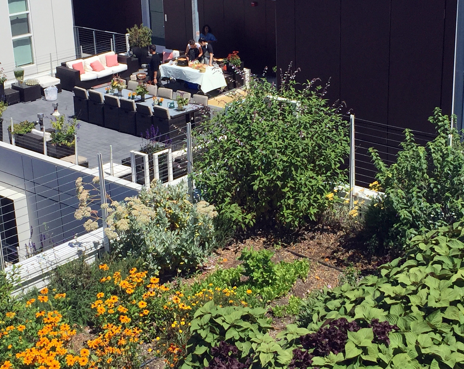 Rasmussen and assistants set up for pop-up lunch on a rooftop in Berkeley, amid the organic garden plots of Top Leaf Farms.