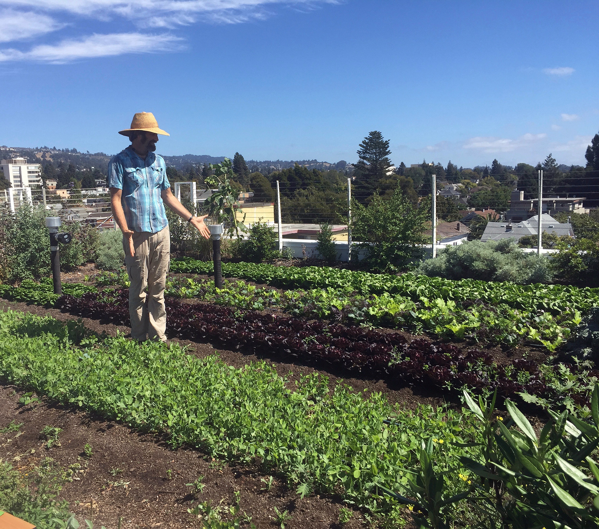 Top Leaf Farm's founder, ecological designer and organic farmer Benjamin Fahrer, introduces some of his bounty. His hyper-local rooftop farm, delivers to customers within a 3 mile radius, including Pizzaiolo, Gather and Chez Panisse.