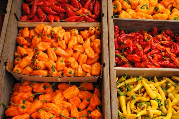 Hot peppers in all degrees of sweet and spicy at Tierra Vegetables Farm, Petaluma.