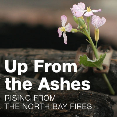 Up From The Ashes - Rising From the North Bay Fires
