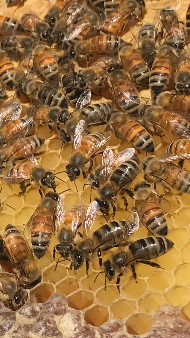 Bees hard at work.