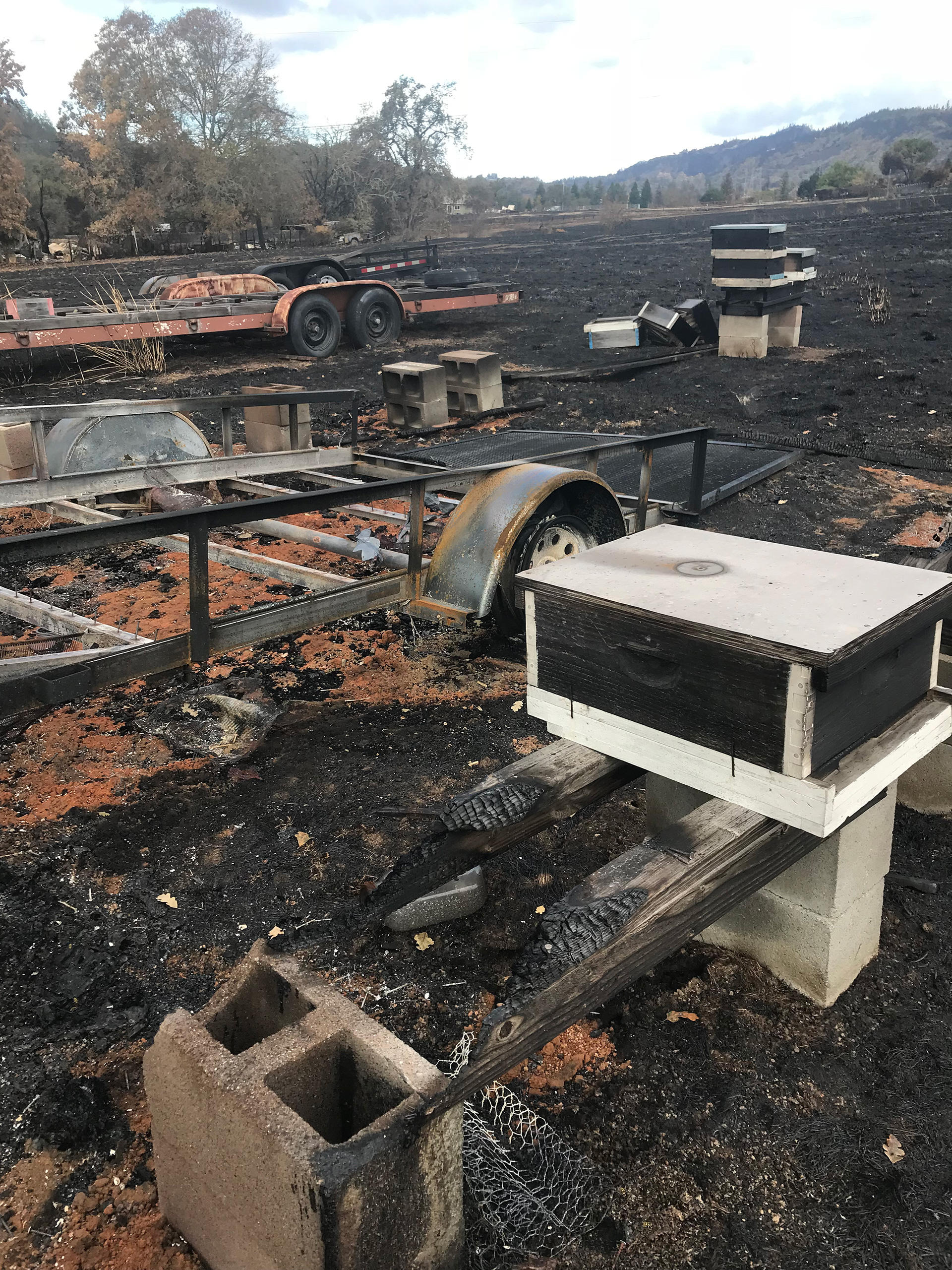 "The post-fire remnants of Barker's ""pirate bee ships"" on Suzy Fizell's property in Santa Rosa."