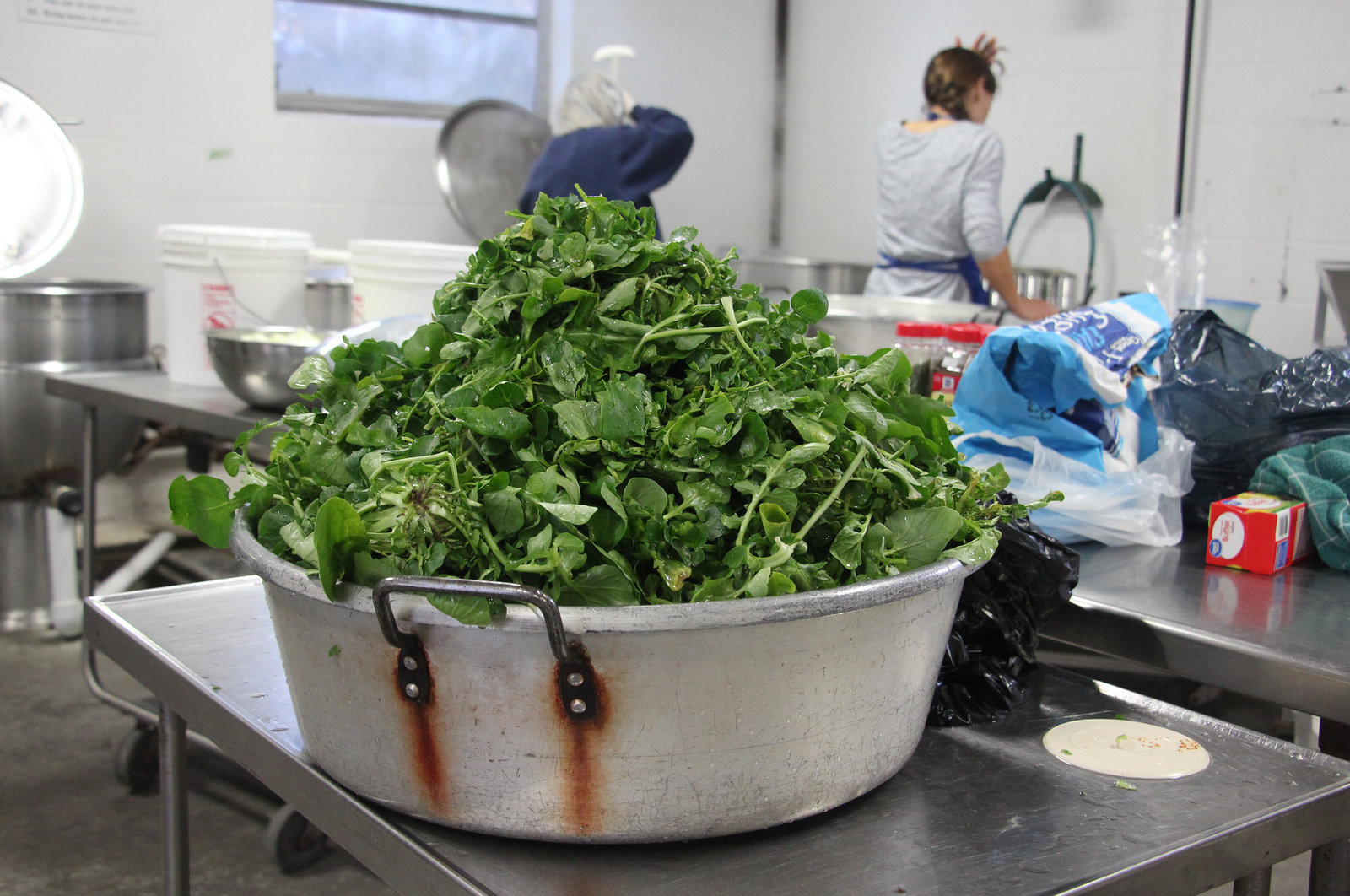 Rhonda Mayberry's creasy greens, ready to be cooked and canned.