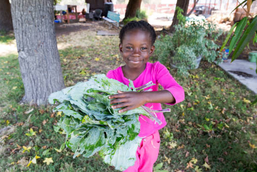 A participant collects kale at the Acta Non Verba Farm in East Oakland