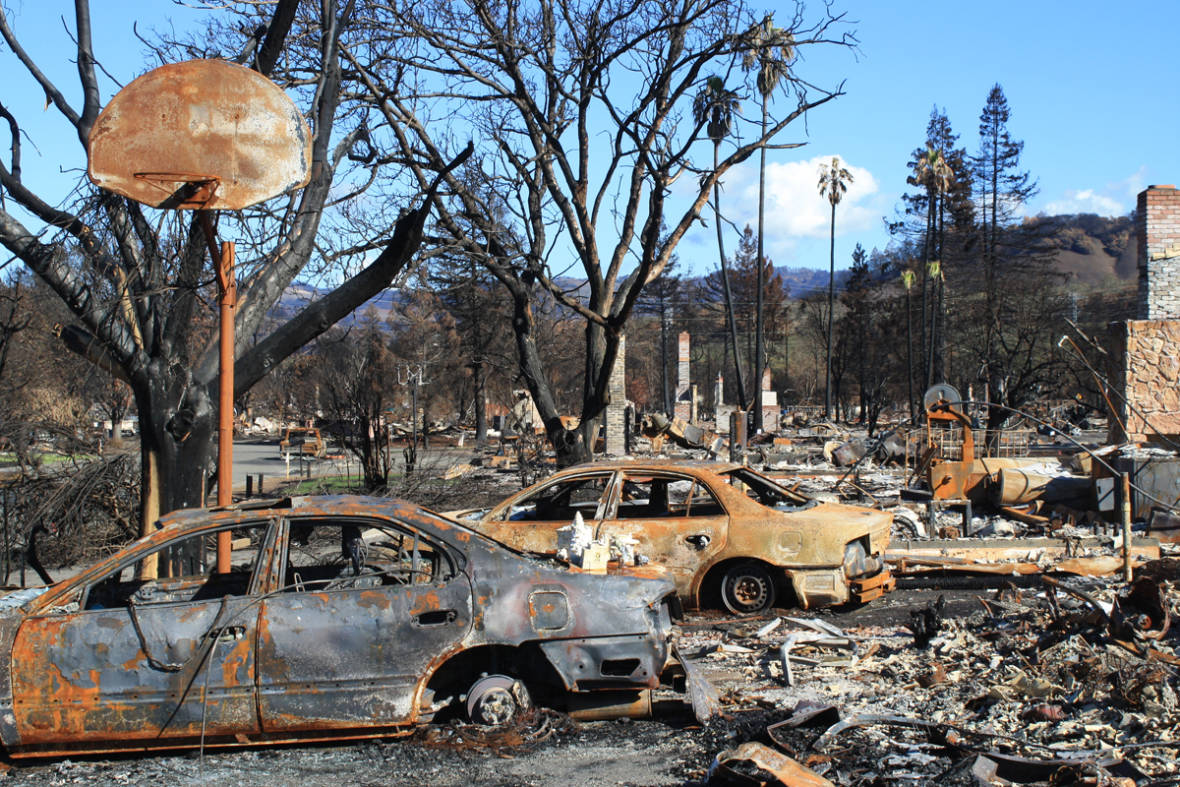 Fire Ecology's Lessons for a More Resilient Future