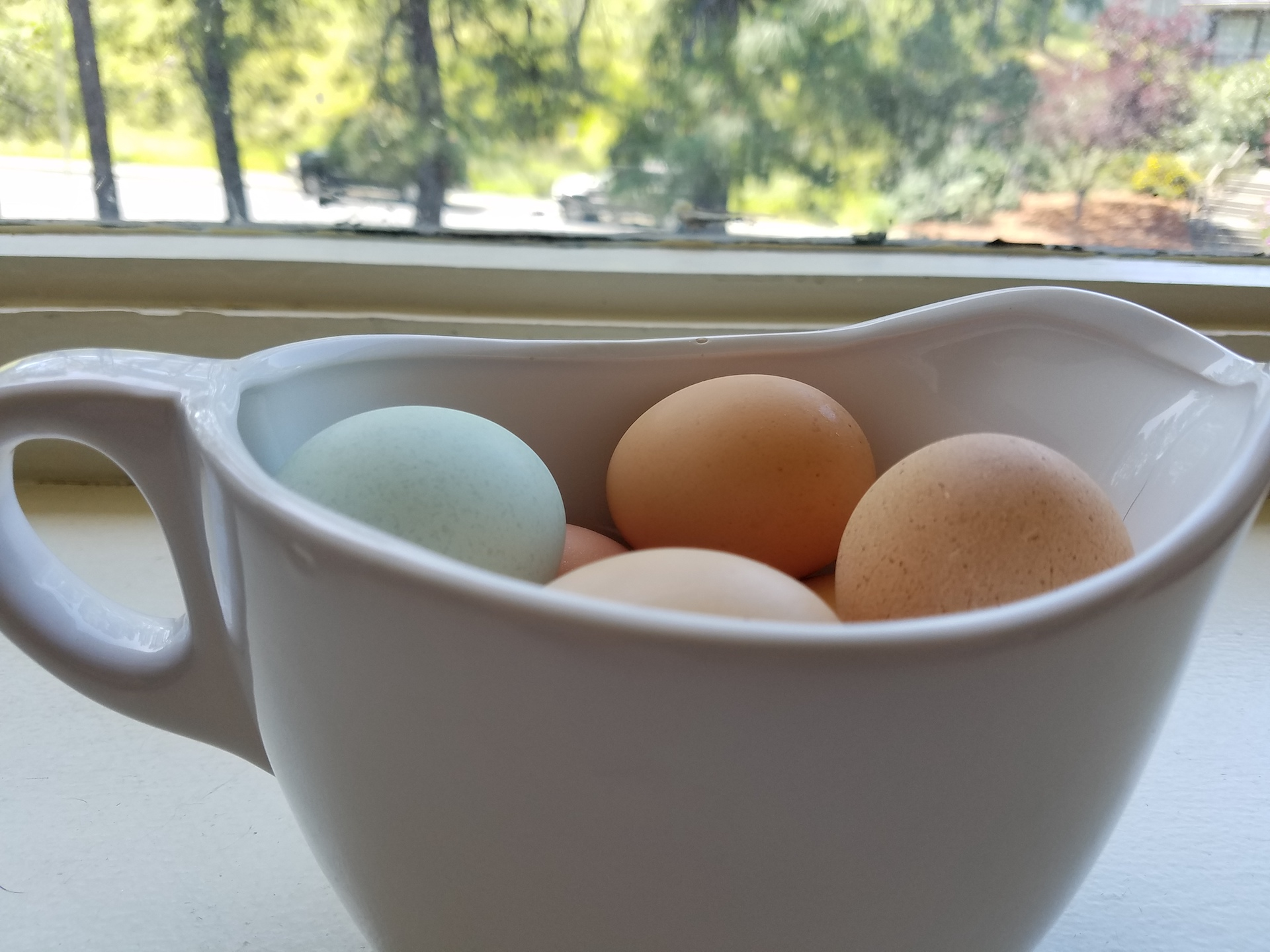 The multi-colored eggs.