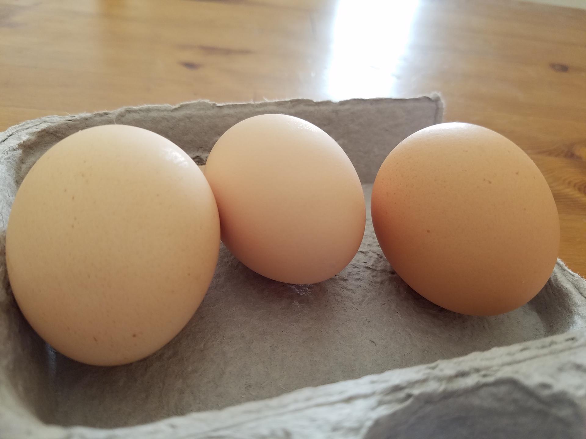 Eatwell eggs