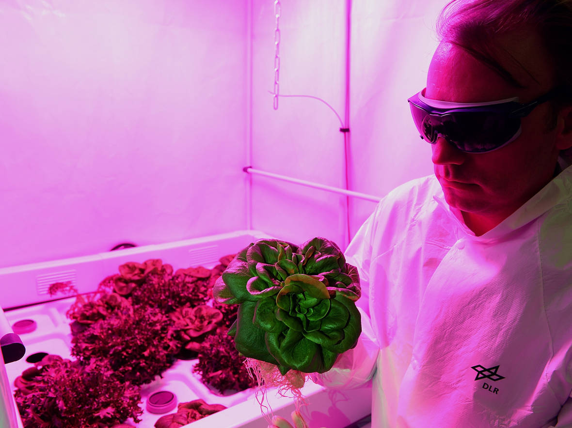 Antarctic Veggies: Practice For Growing Plants On Other Planets