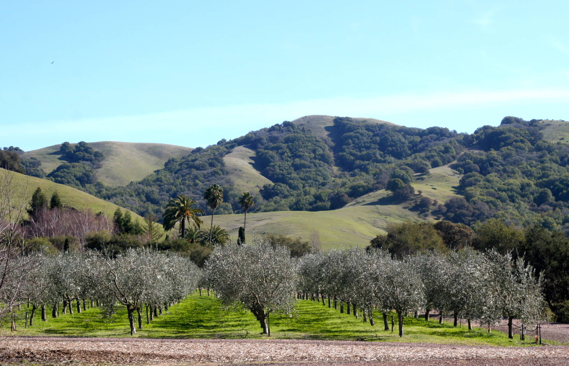 The stunning grounds (and olive trees) at McEvoy Ranch.