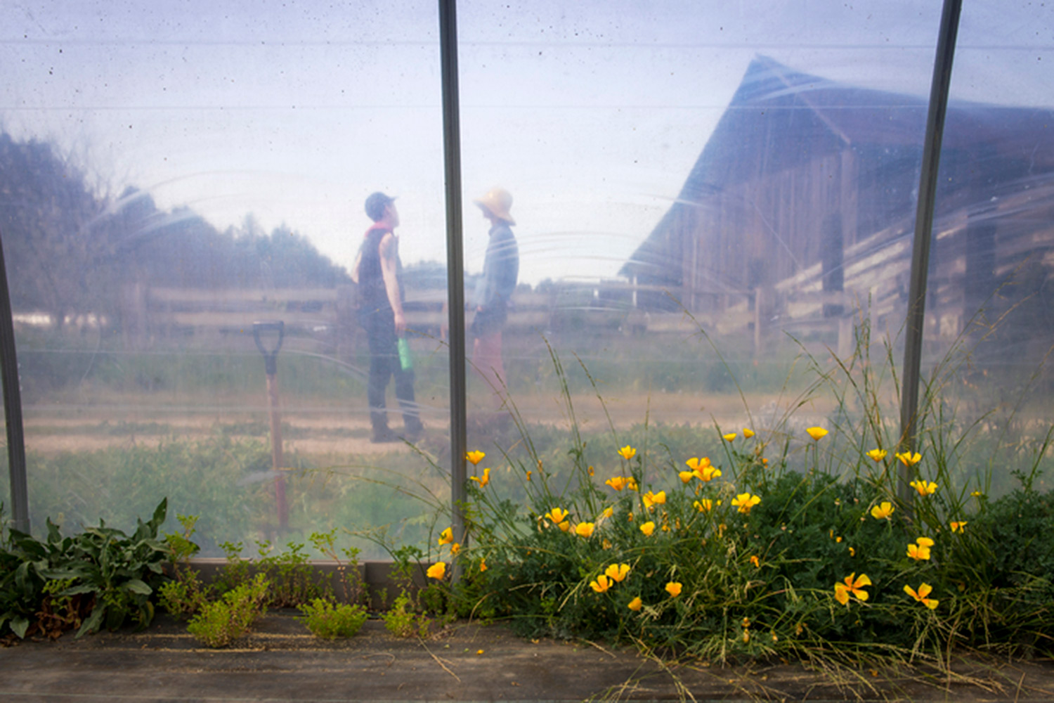 Finn Oakes and Lauren Anderson outside their greenhouse.