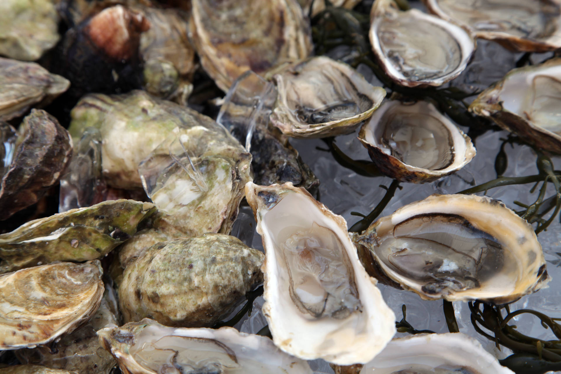 OysterFest will be an oyster-lover's paradise on the patio at Waterbar.