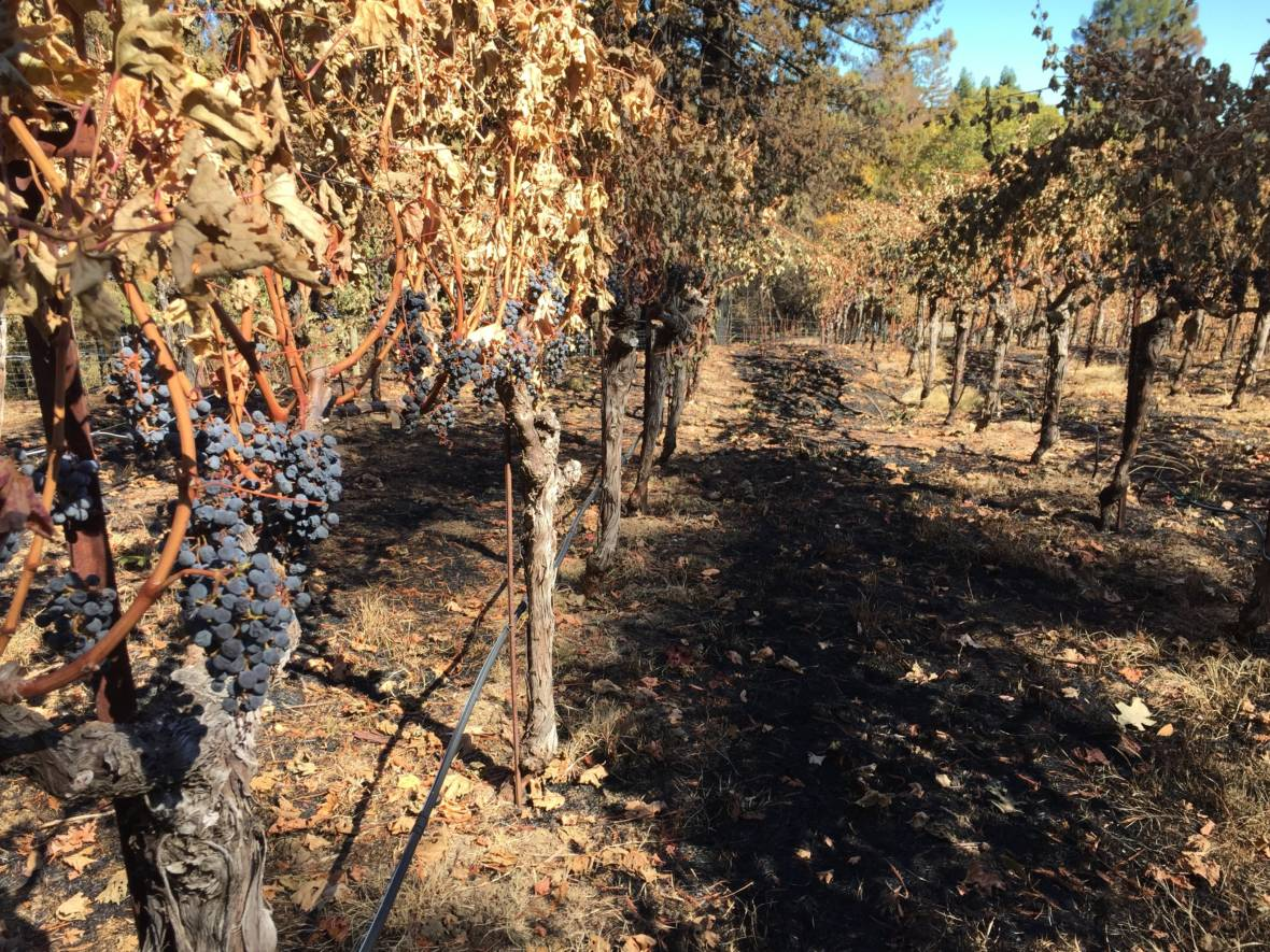 Father-Son Duo Turns Ruined Grapes Into Tasty Aid For Napa Fire Victims
