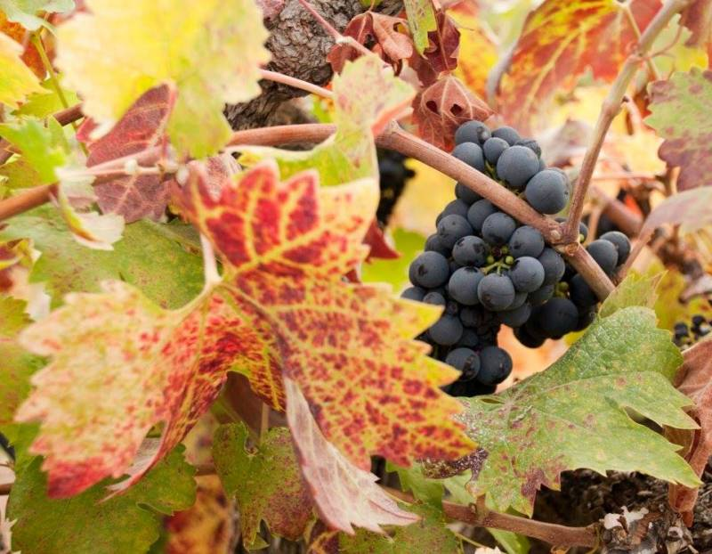 Best Sonoma Wineries to Visit This Fall