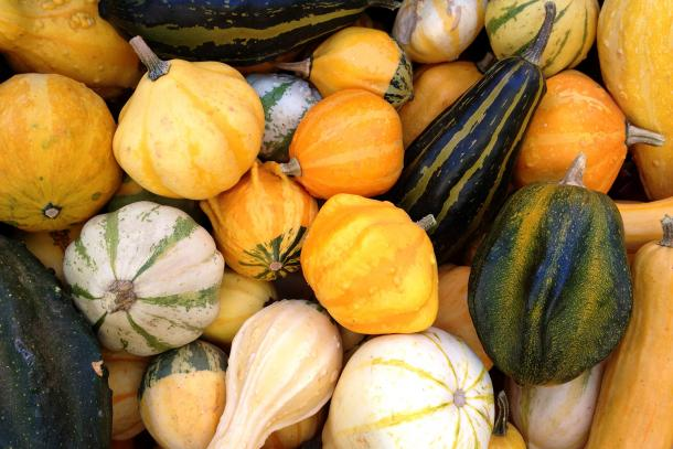 A variety of decorative gourds.