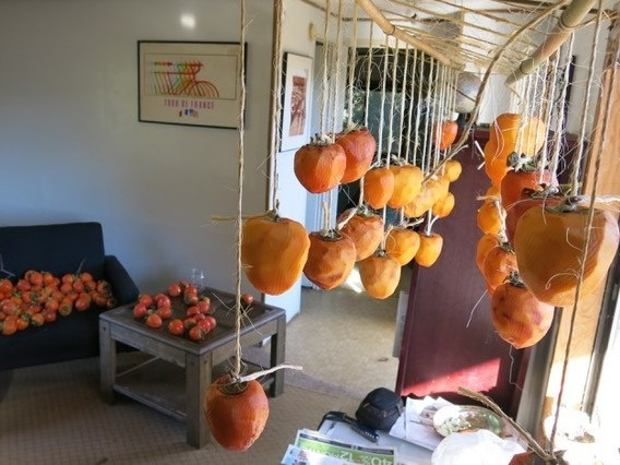 To make hoshigaki, producers use twine to suspend peeled persimmons from bamboo racks. The process can take between one and two months, and caretakers give regular massages to the softening persimmons.