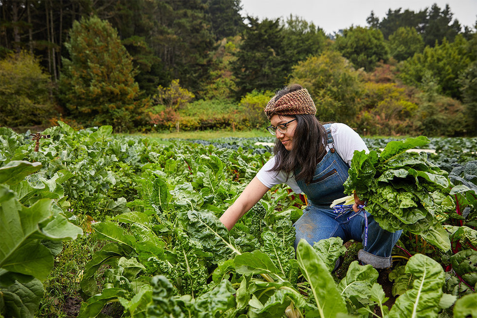 Greens' new chef de cuisine, Denise St. Onge, at Green Gulch Farm in Marin.