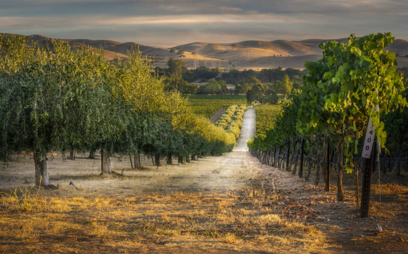 A Perfect Weekend in Livermore Valley Wine Country