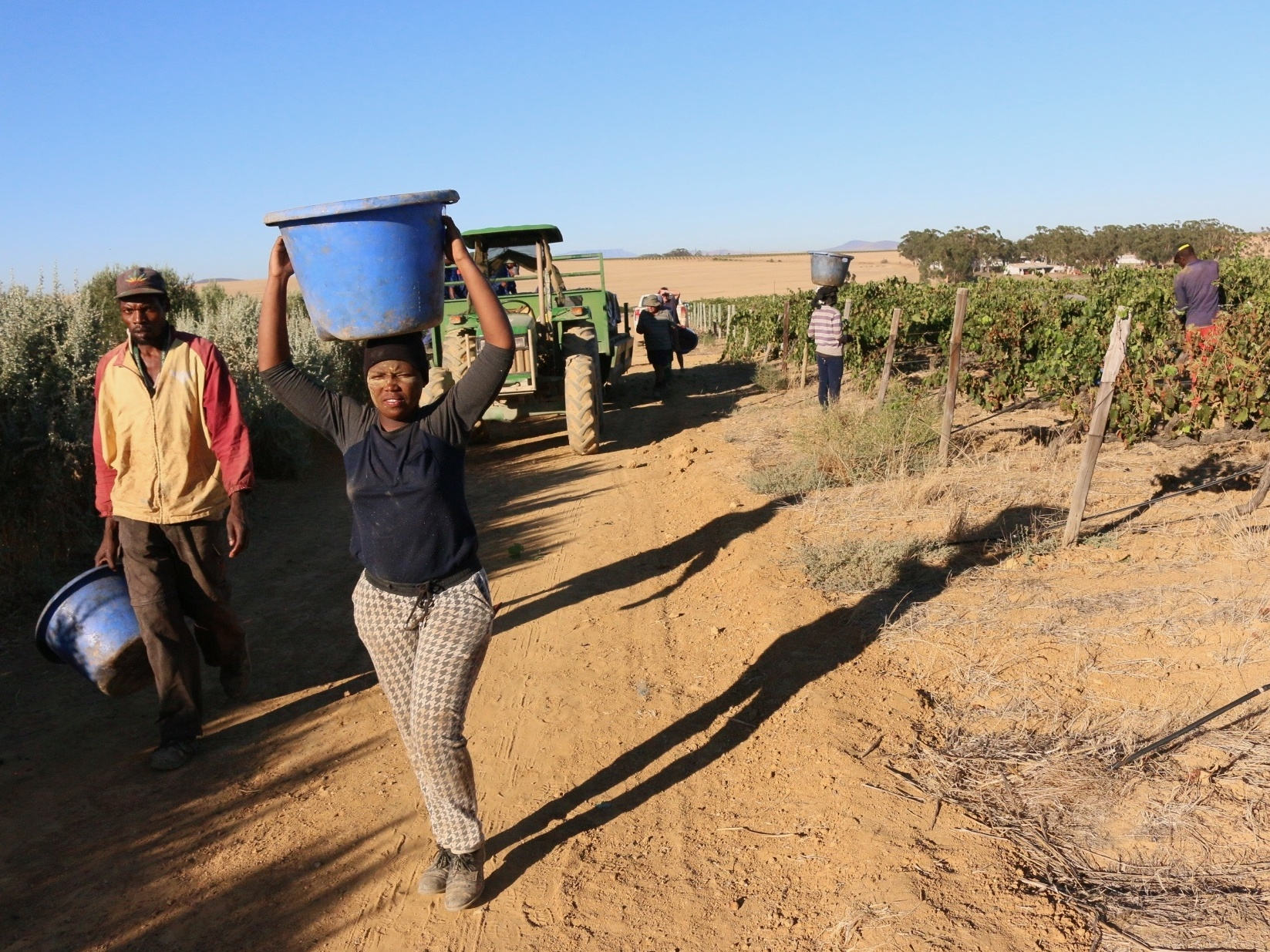 Seasonal workers help with the harvest at the Shiraz vineyard. Most come from South Africa or Zimbabwe.
