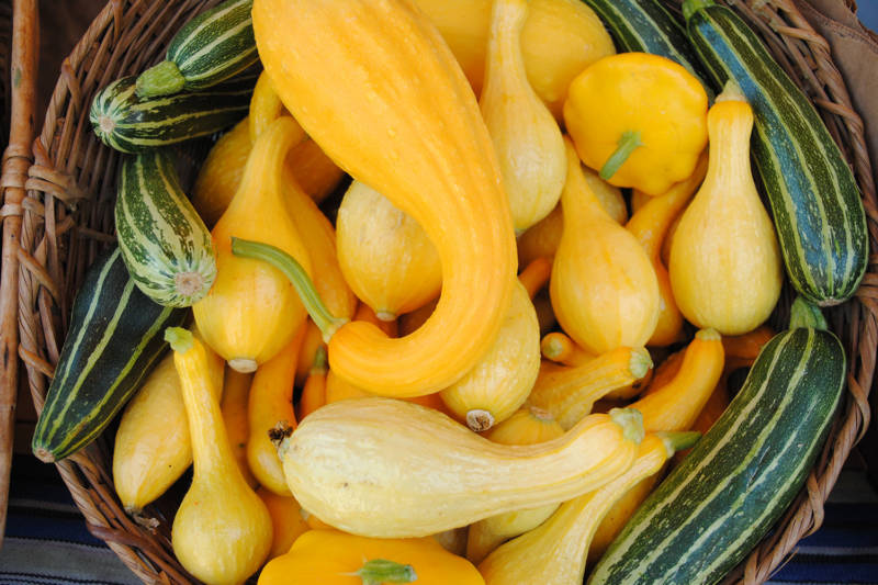 The many shapes and sizes of summer squash.
