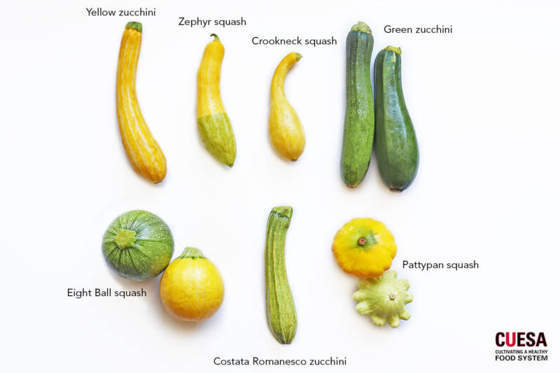Zucchini And Beyond A Farmers Market Guide To Summer Squash Kqed