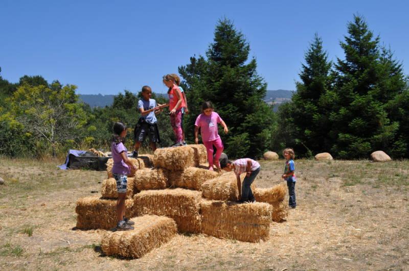Photo courtesy of Farm Discovery at Live Earth Farm