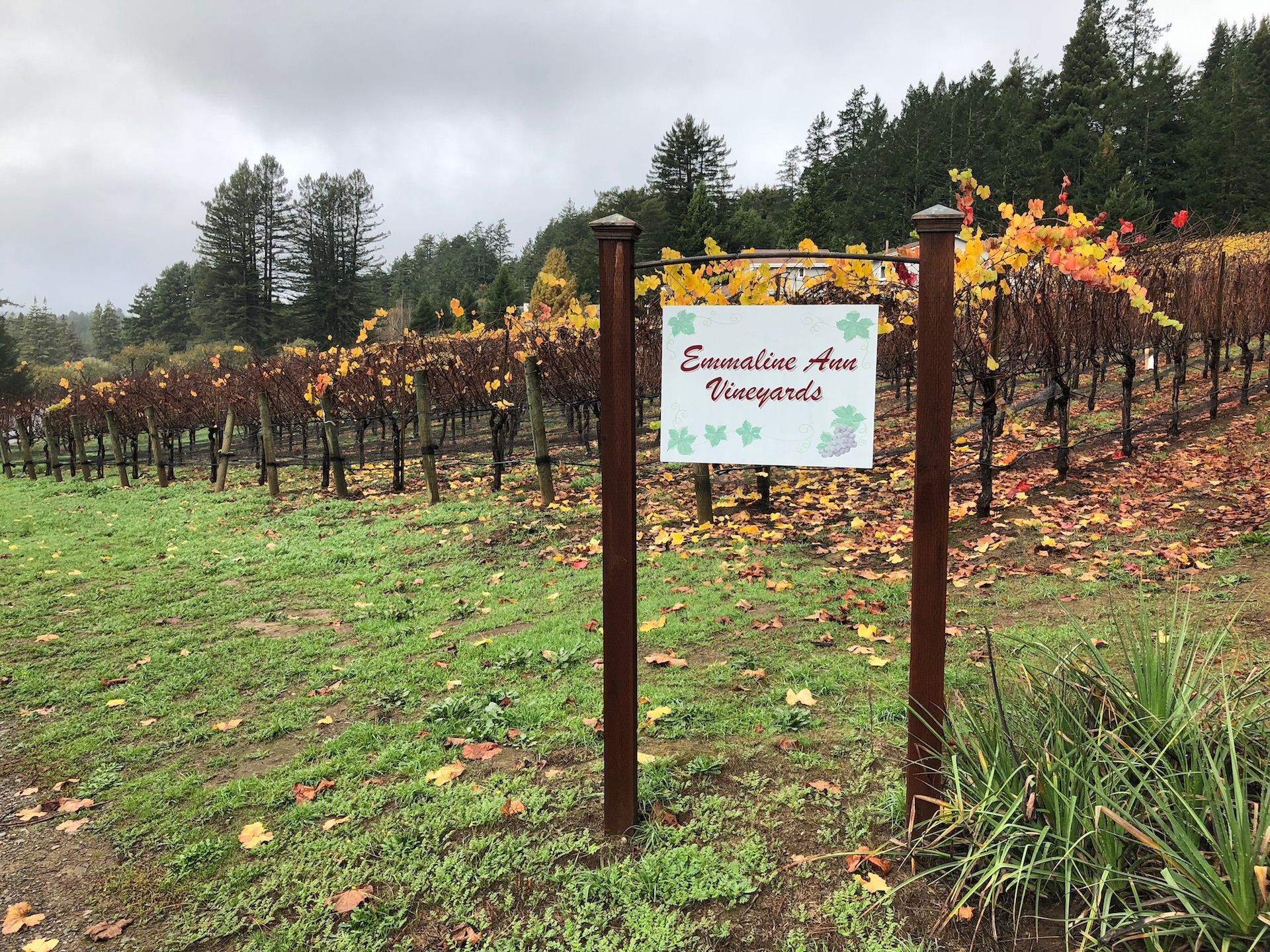 Sebastopol's Emmaline Ann Vineyards, one of the sources for Cobb Wines' Pinot Noir