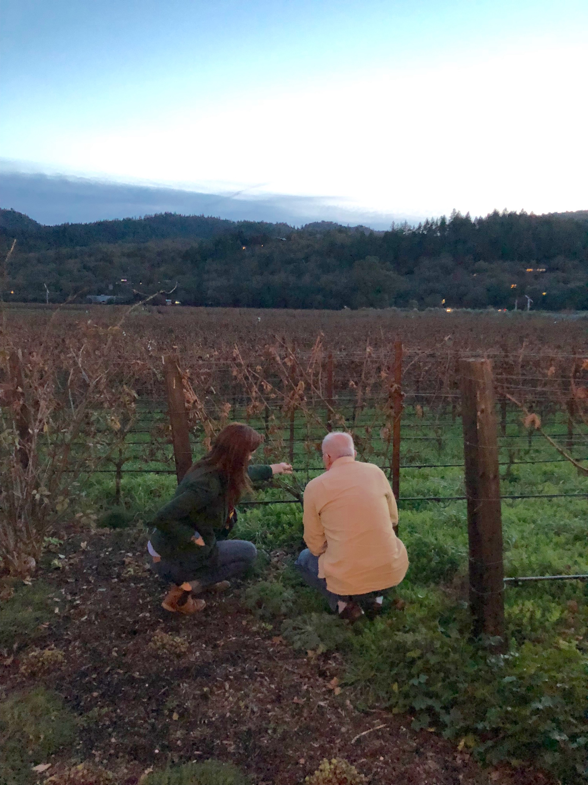 Larkmead's Deanna Basham explains vine grafting to John