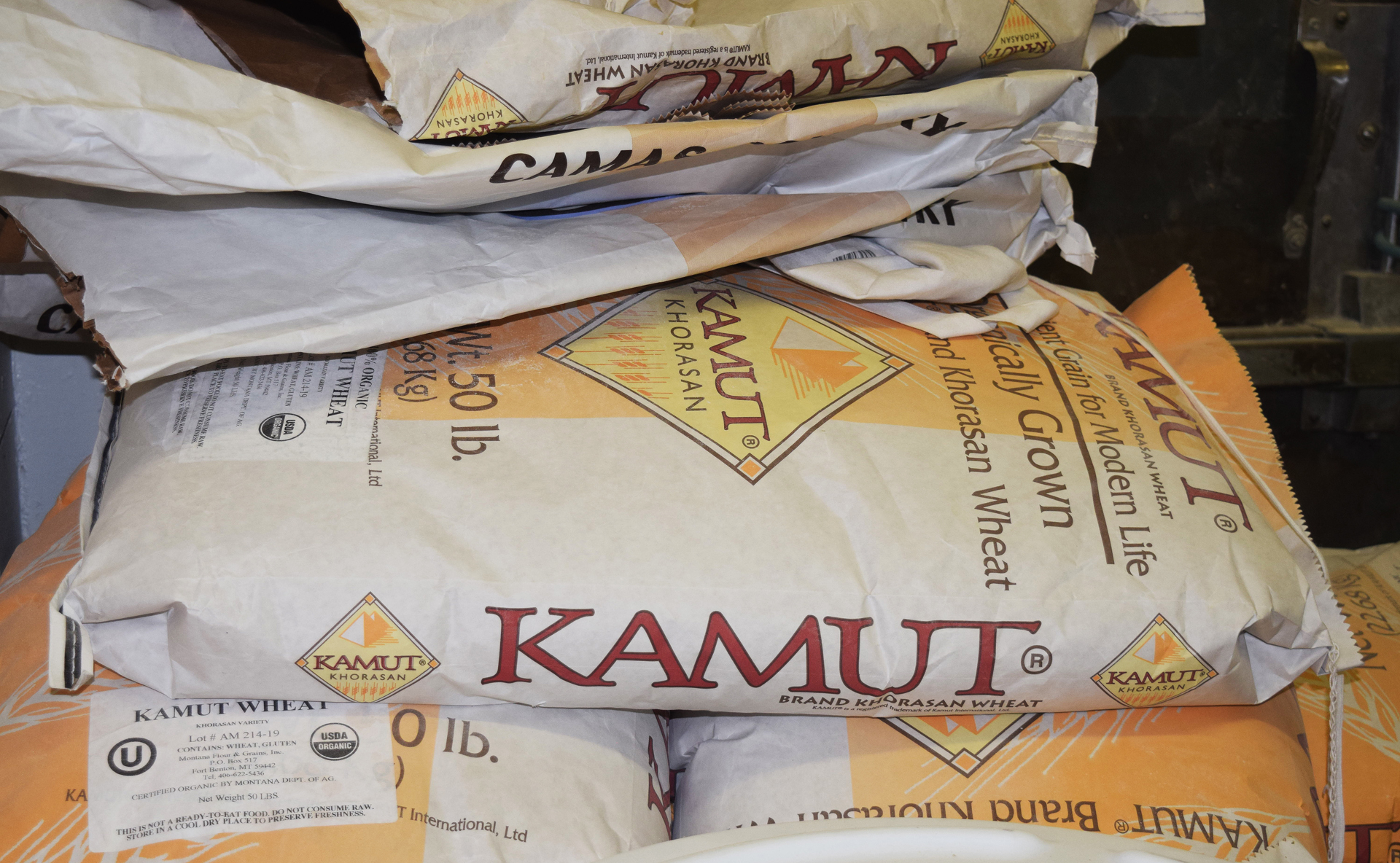 The kamut ground at the bakery is from khorasan, an ancient grain that predates modern durum wheat.