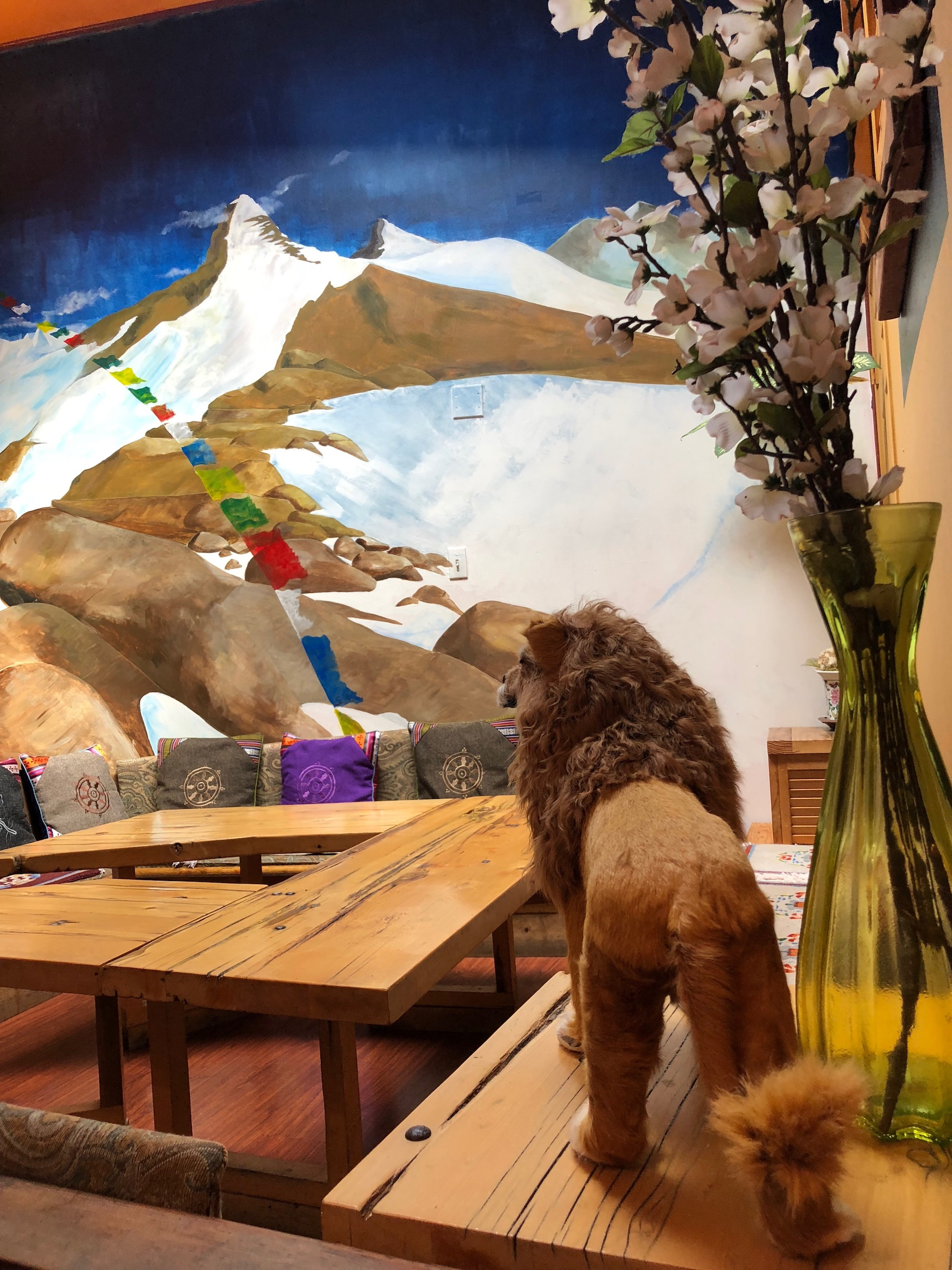 A lion gazes over the Himalayan landscape at Nomad Tibetan in north Berkeley