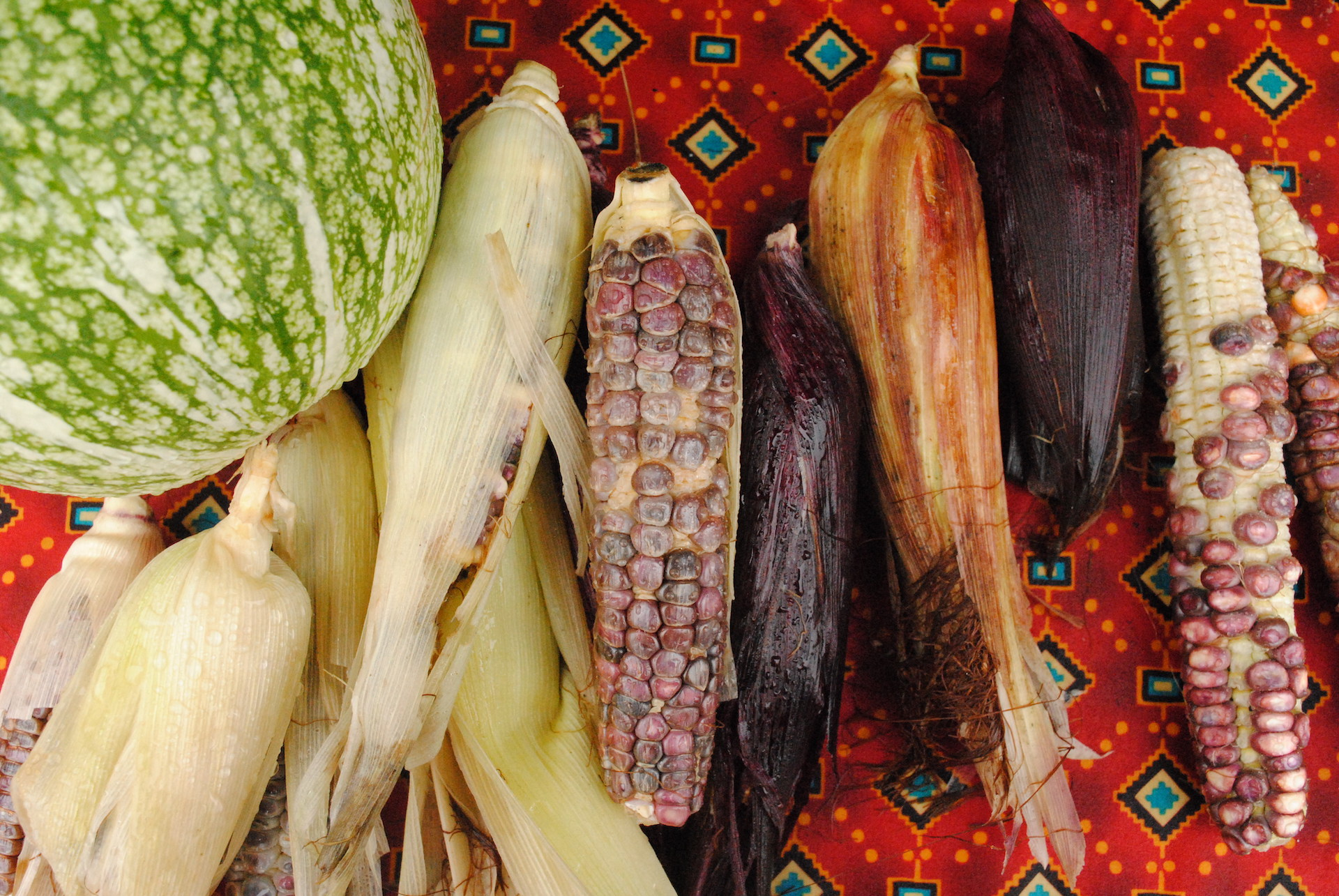 An array of corns in different colors