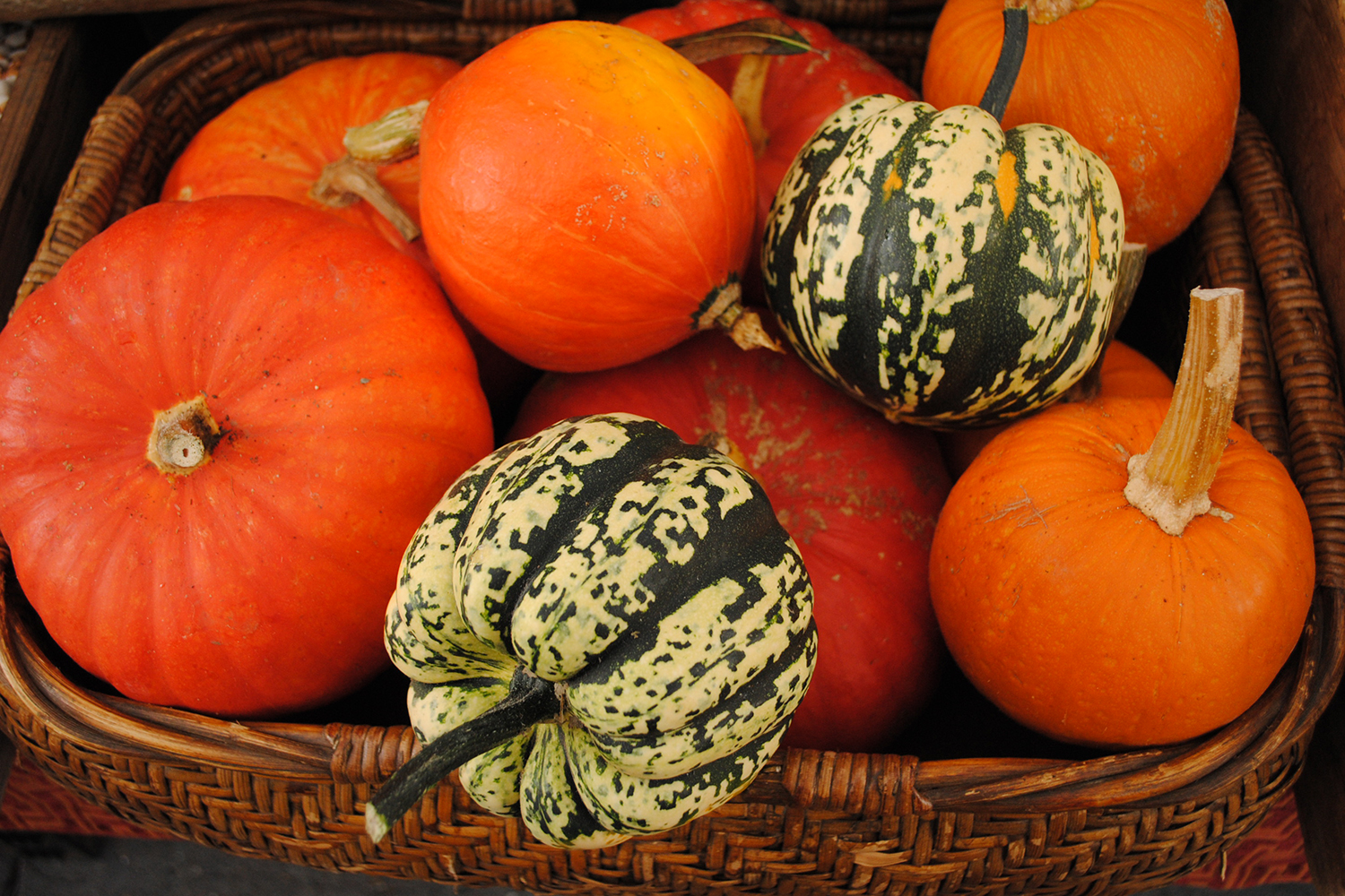 Squash from Lonely Mountain Farms