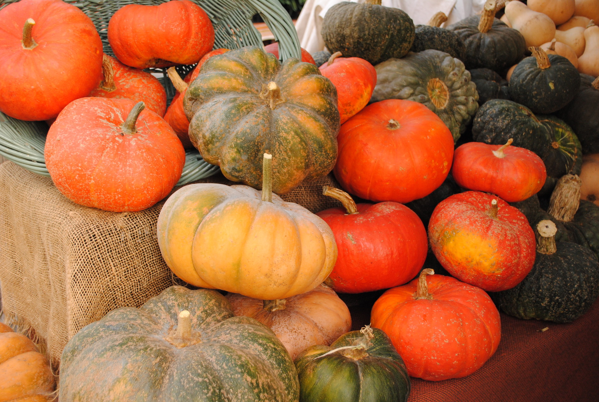 A colorful assortment of winter squash
